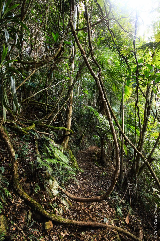 Sometimes the track would get a little tricky, Springbrook National Park