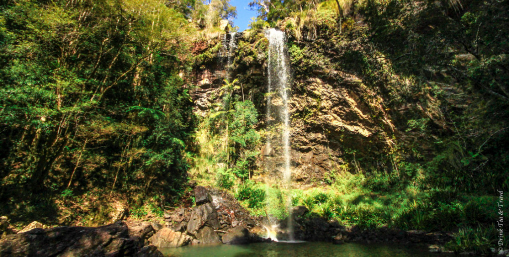 Springbrook National Park, one of the best day trips from Brisbane