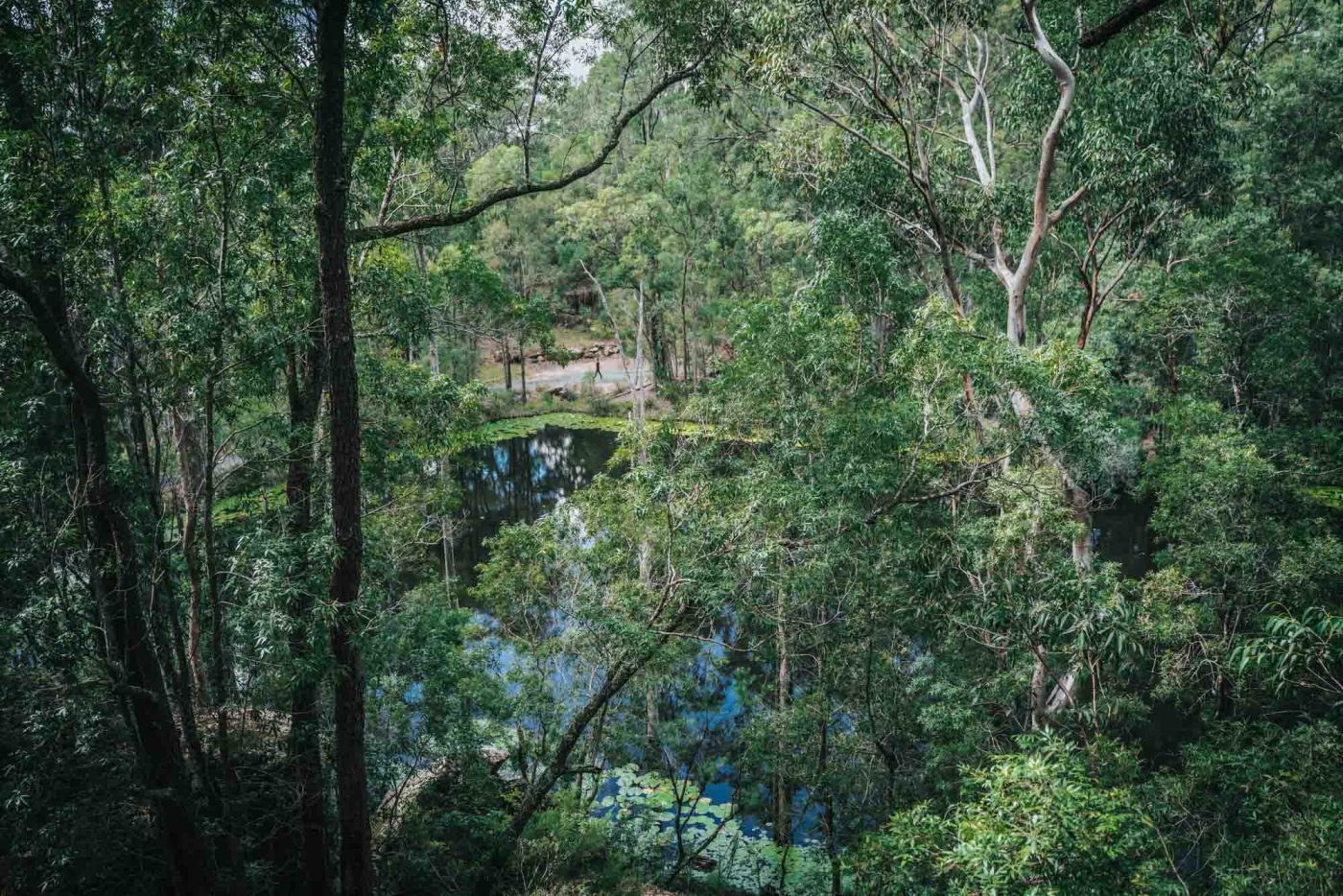 Lovely views of the billabong on site at the Billabong Retreat
