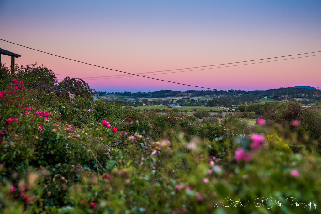 Pink sunset in Mole Creek, a small town located near Walls of Jerusalem National Park