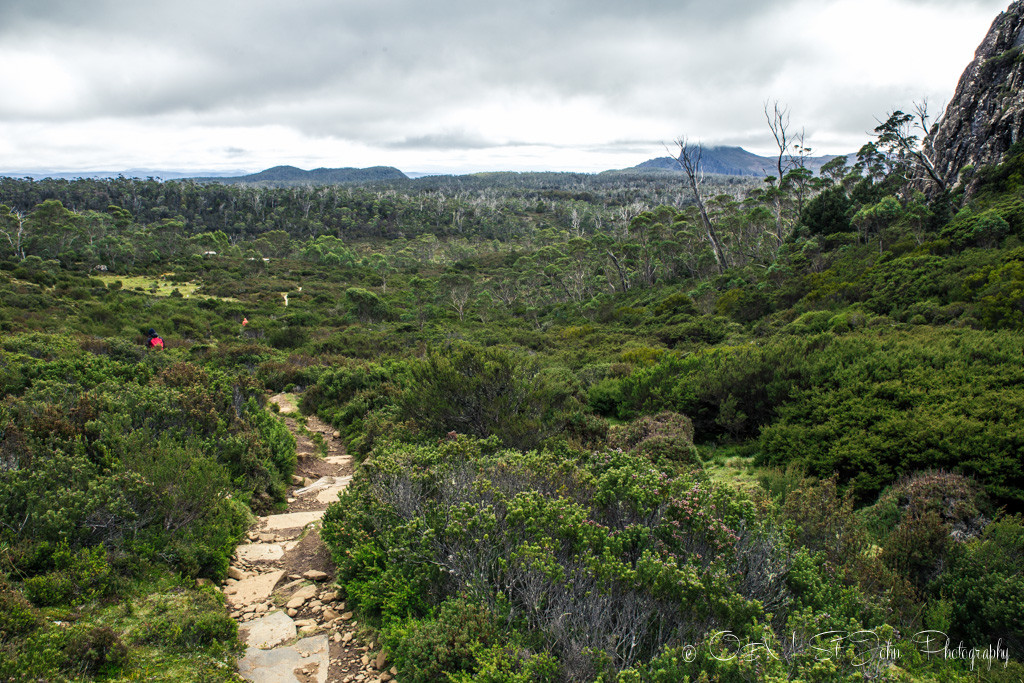 Overlooking the pine forest in Walls of Jerusalem National Park.