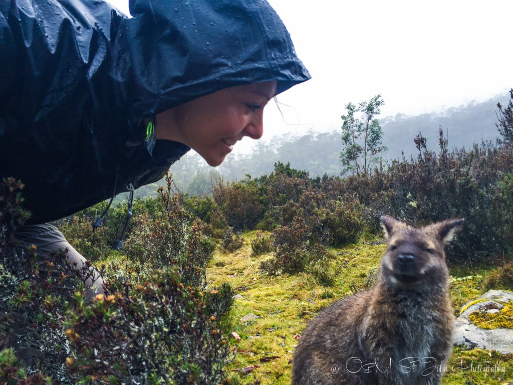Wallaby selfie!!! Walls of Jerusalem National Park, Tasmania