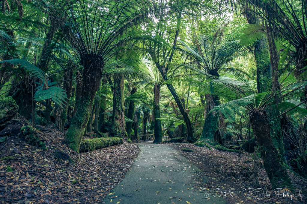 best places to visit in tasmania: Mt Field National Park, Tasmania.