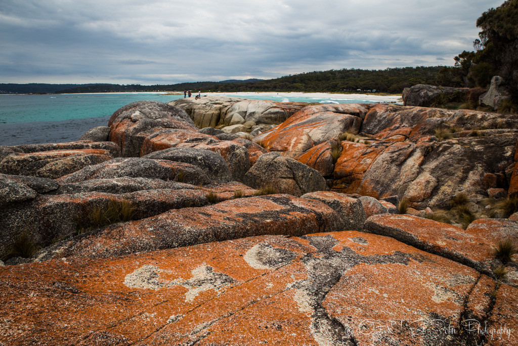 Lichen, composite organism that emerges from algae or cyanobacteria, gives the rocks in the Bay of Fires their orange colour.