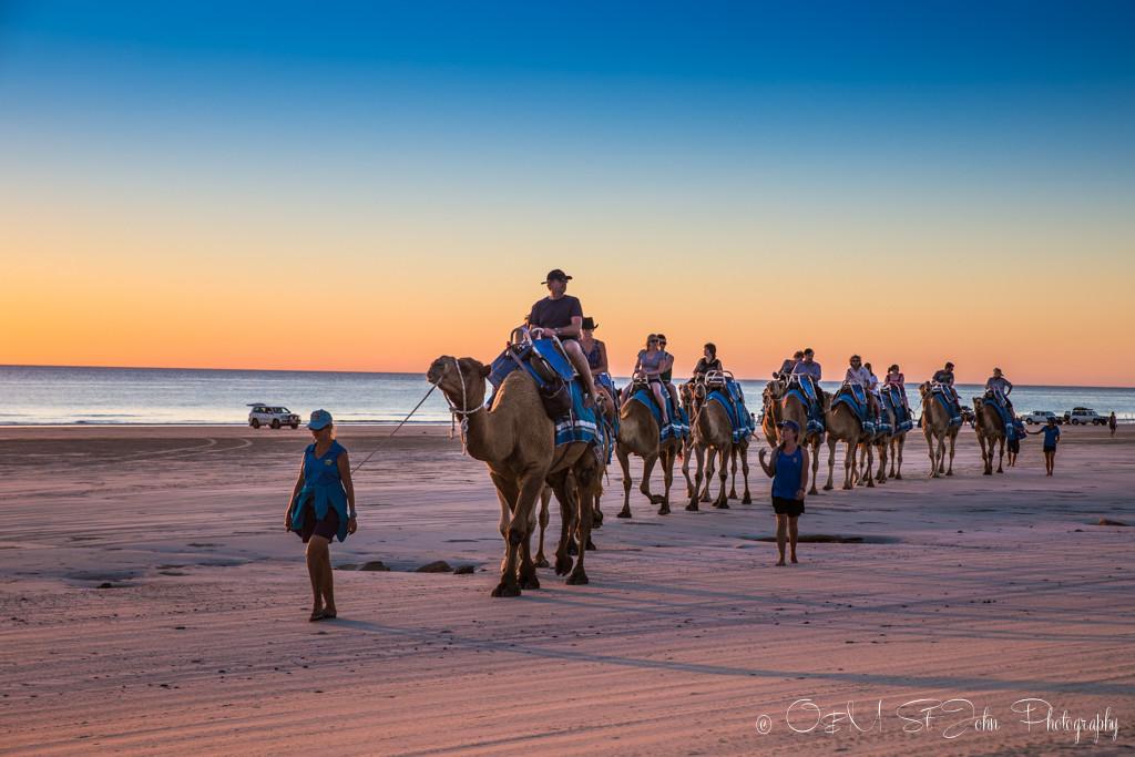 Camel train on Cable Beach. Broome. Western Australia
