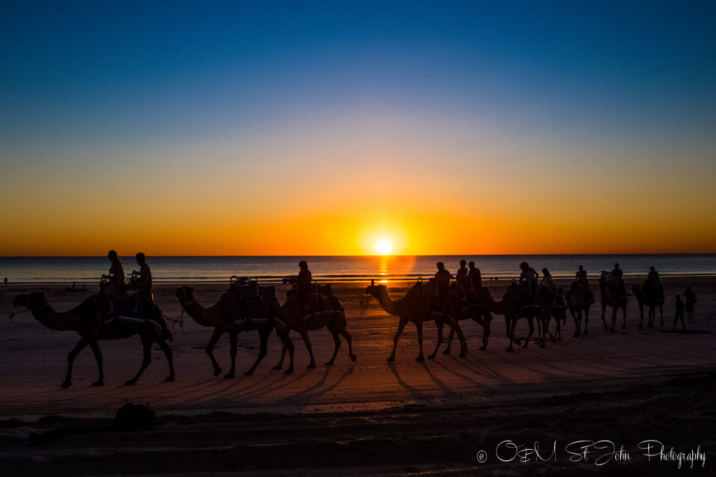 Camel train on Cable Beach. Broome. Western Australia