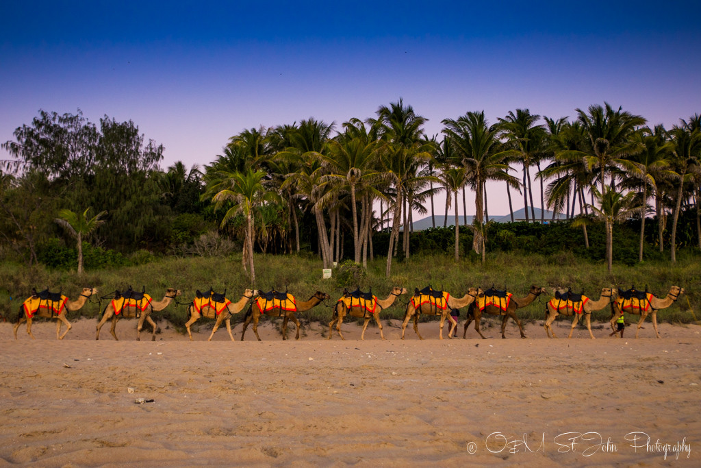 Things to do in Broome, Camel train on Cable Beach. Broome