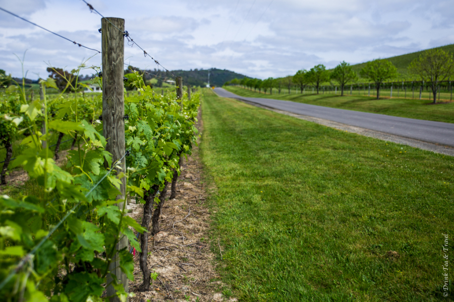 The Best Yarra Valley Wine Tours