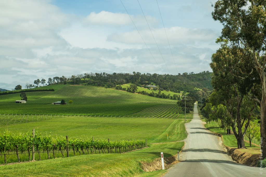 In Yarra Valley, Victoria, wine regions in Australia
