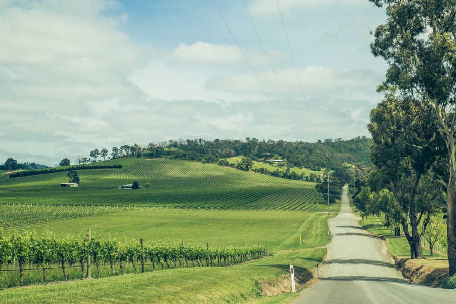 10 Best Things to do in Yarra Valley, Australia