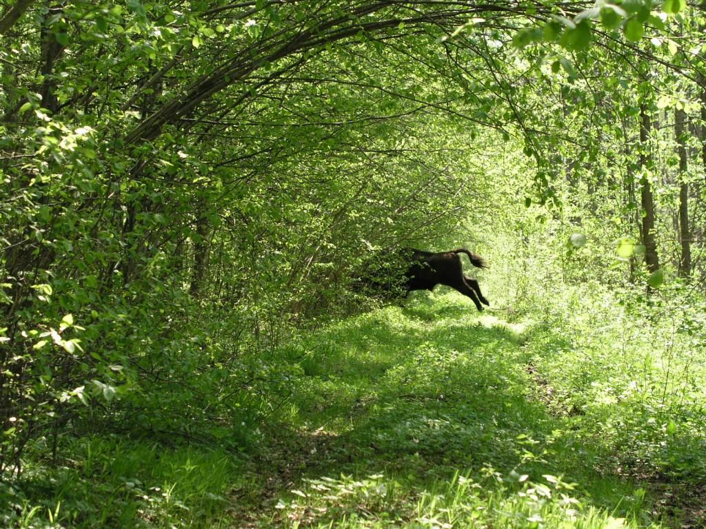 Bialowieza Forest, Belarus & Poland