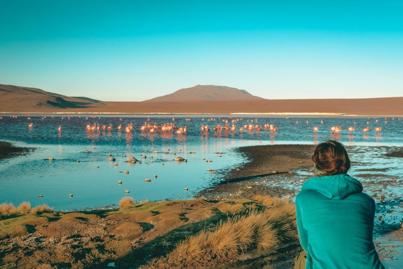 Admiring the flamingos