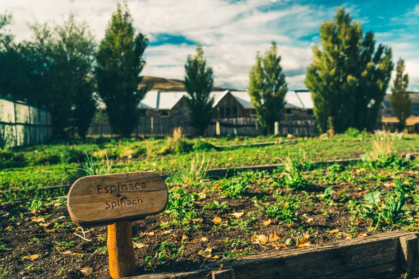Organic garden at Las Torres Hotel