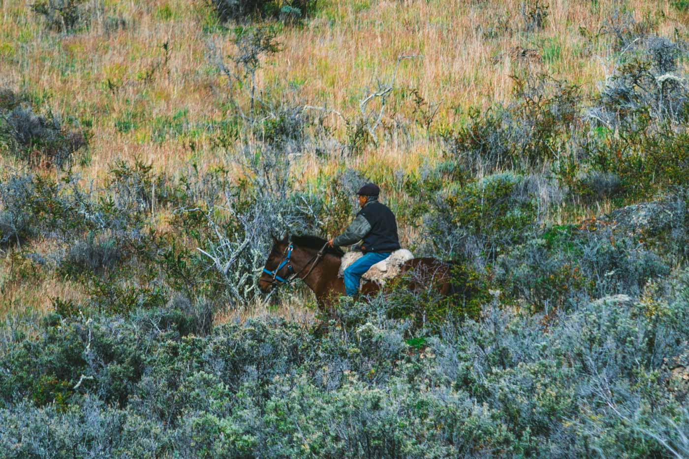 A local gaucho makes his way across a field in Patagonia, Chile