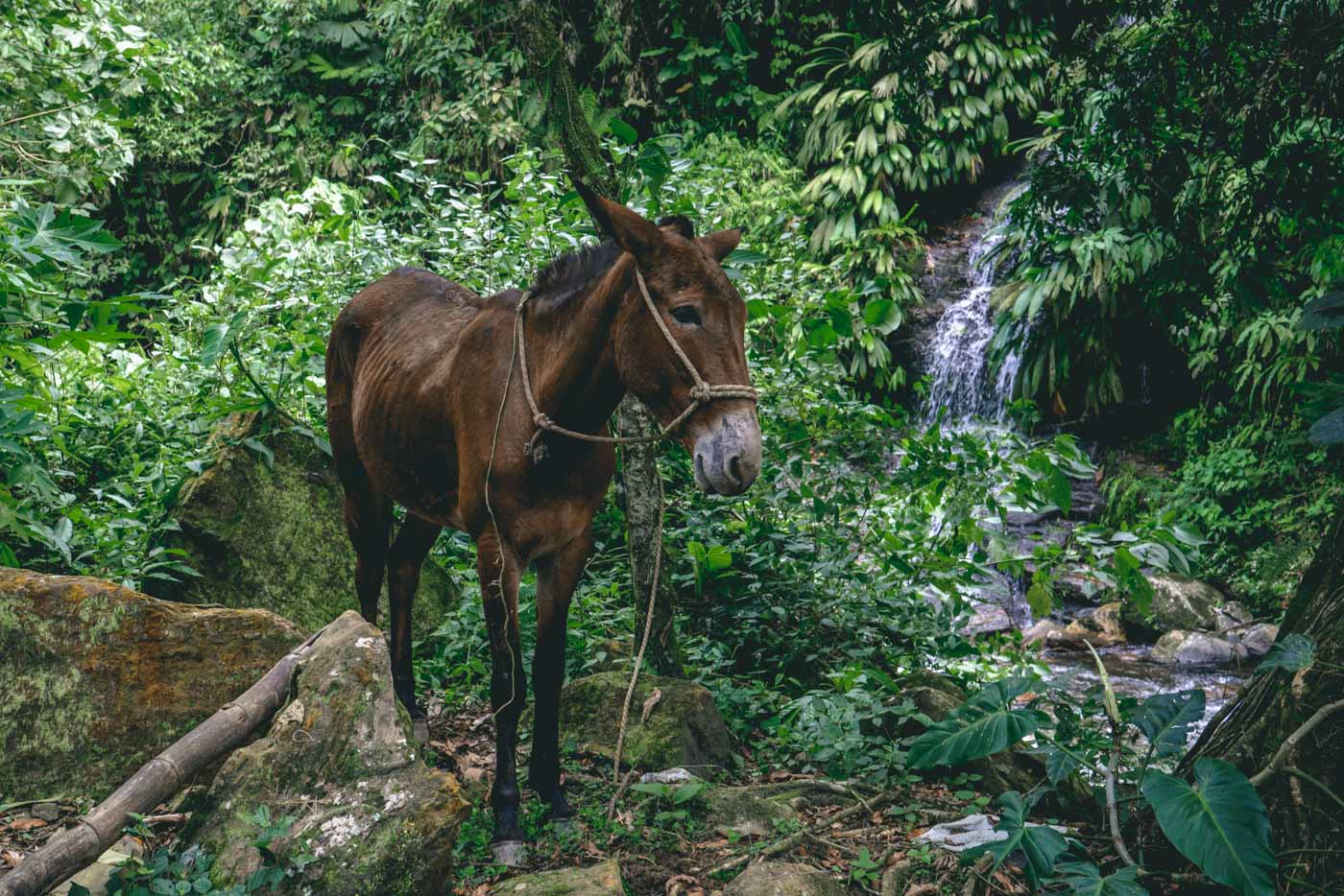 parque tayrona: Hiring a horse is a practical solution if your pack is heavy! Tayrona National Park