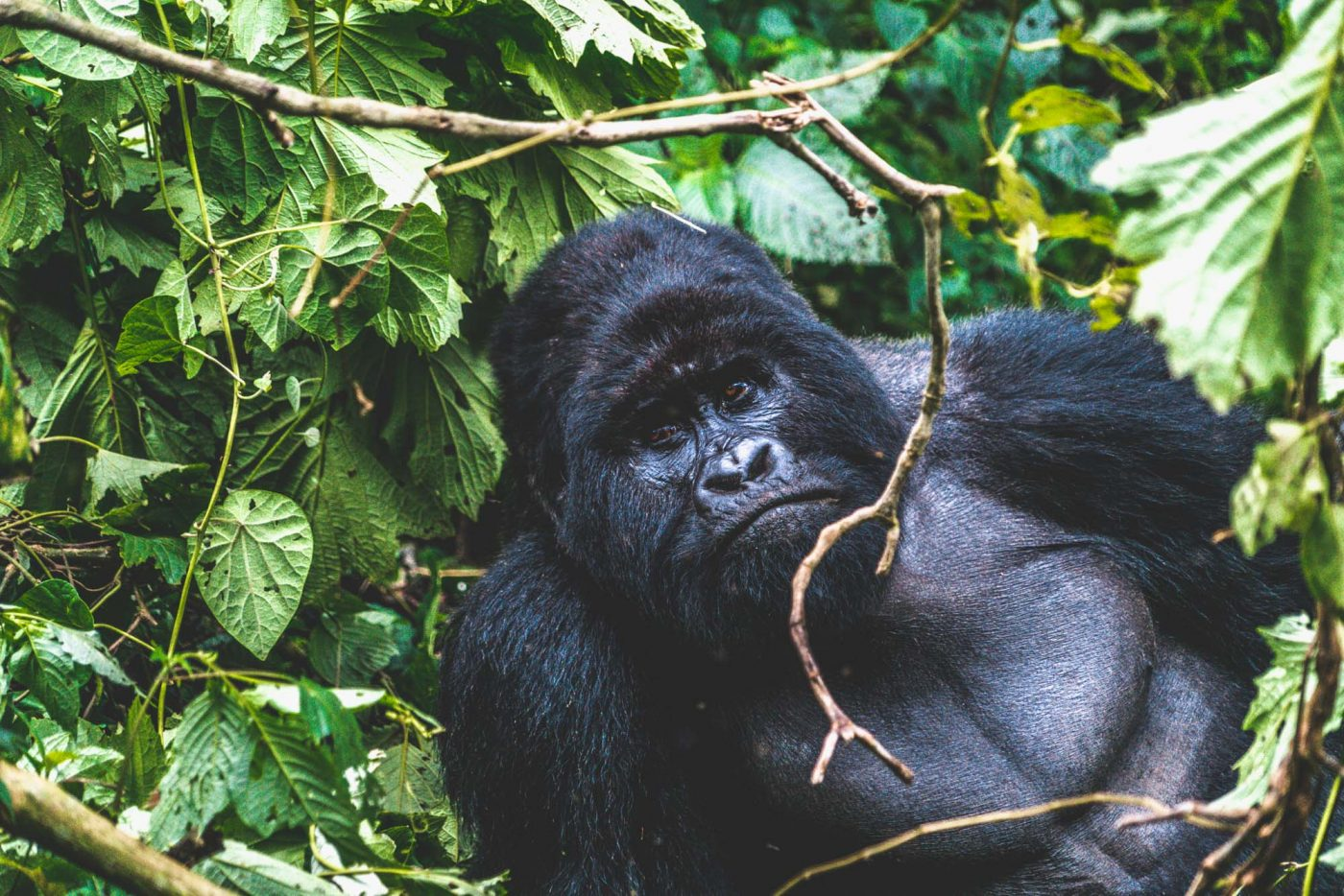 Why you should visit Volcanoes National Park in Rwanda