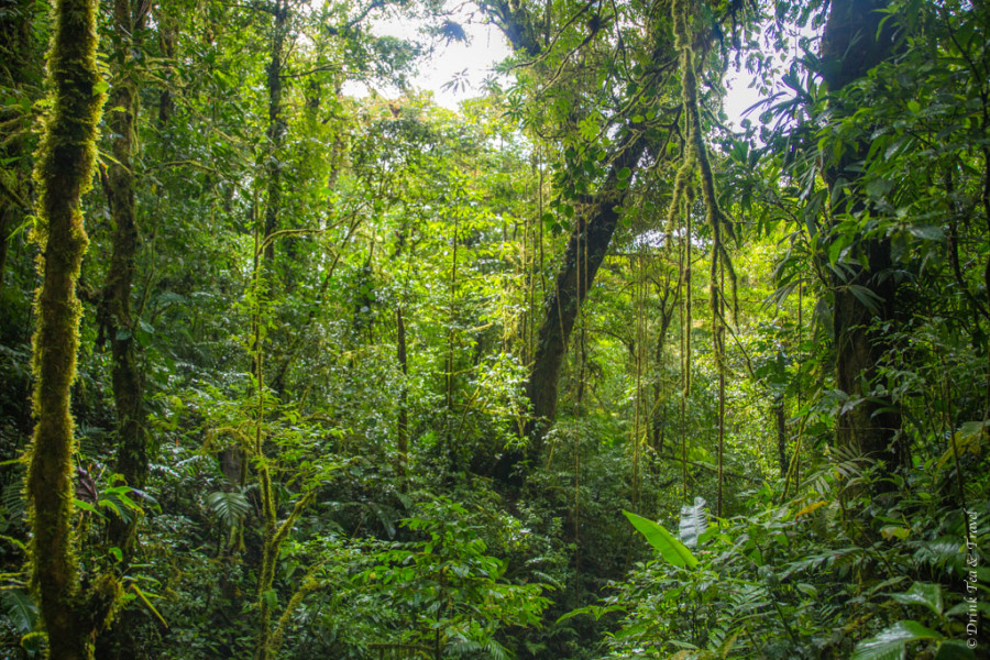 The Ultimate Guide to Visiting Monteverde Costa Rica
