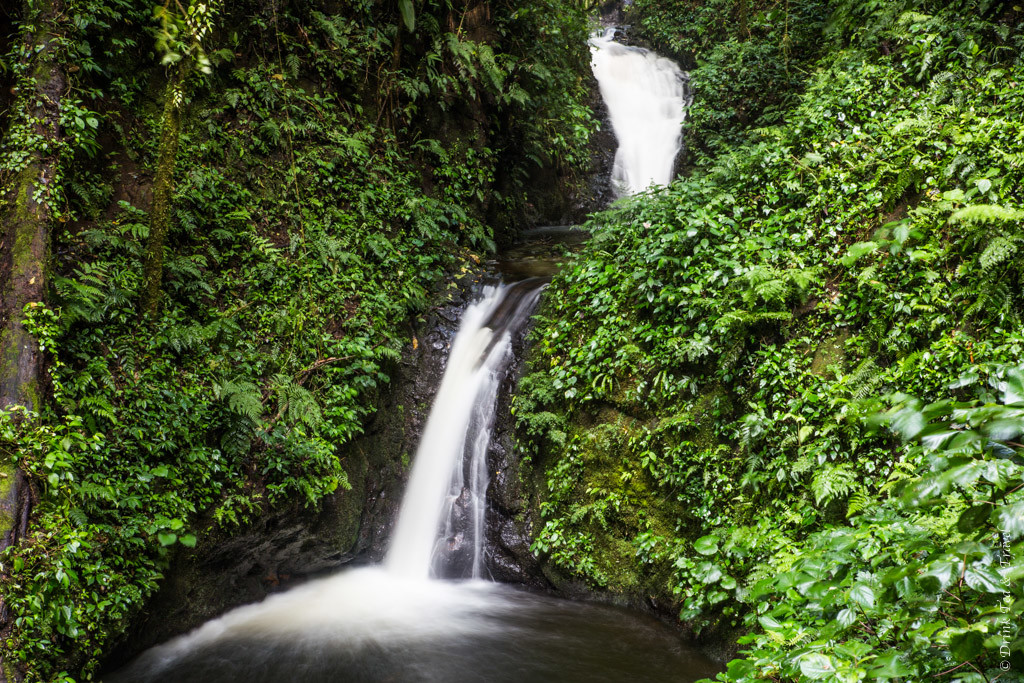 Cascade at the Monteverde Cloud Forest. Costa Rica