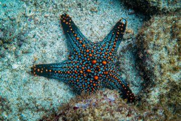 Guide to Scuba Diving in Costa Rica
