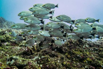 Diving in Catalinas Islands, Costa Rica
