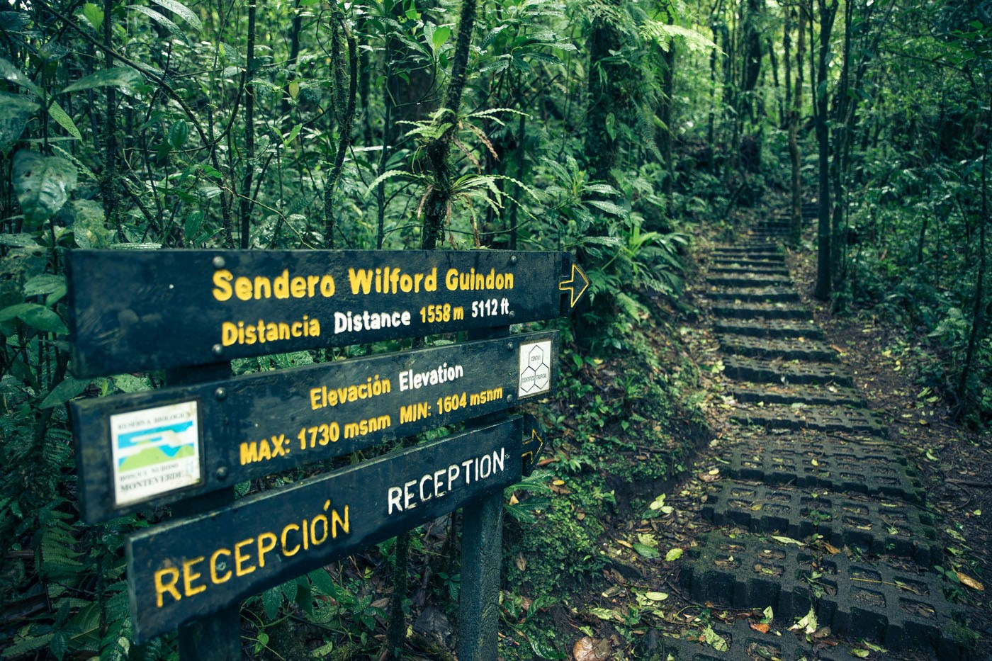 Monteverde Cloud Forest. Costa Rica. Cover Photo