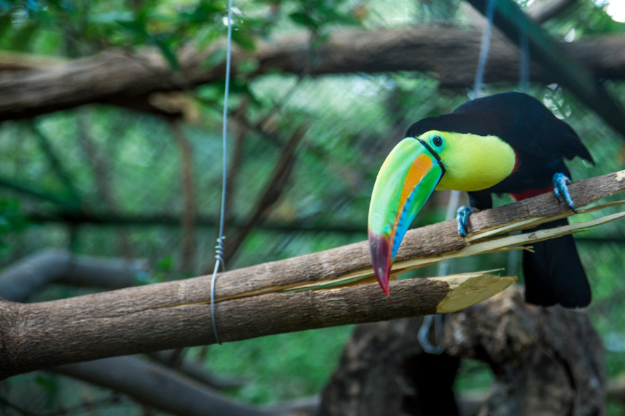 Most Exotic Animals in Costa Rica to Spot on Your Visit