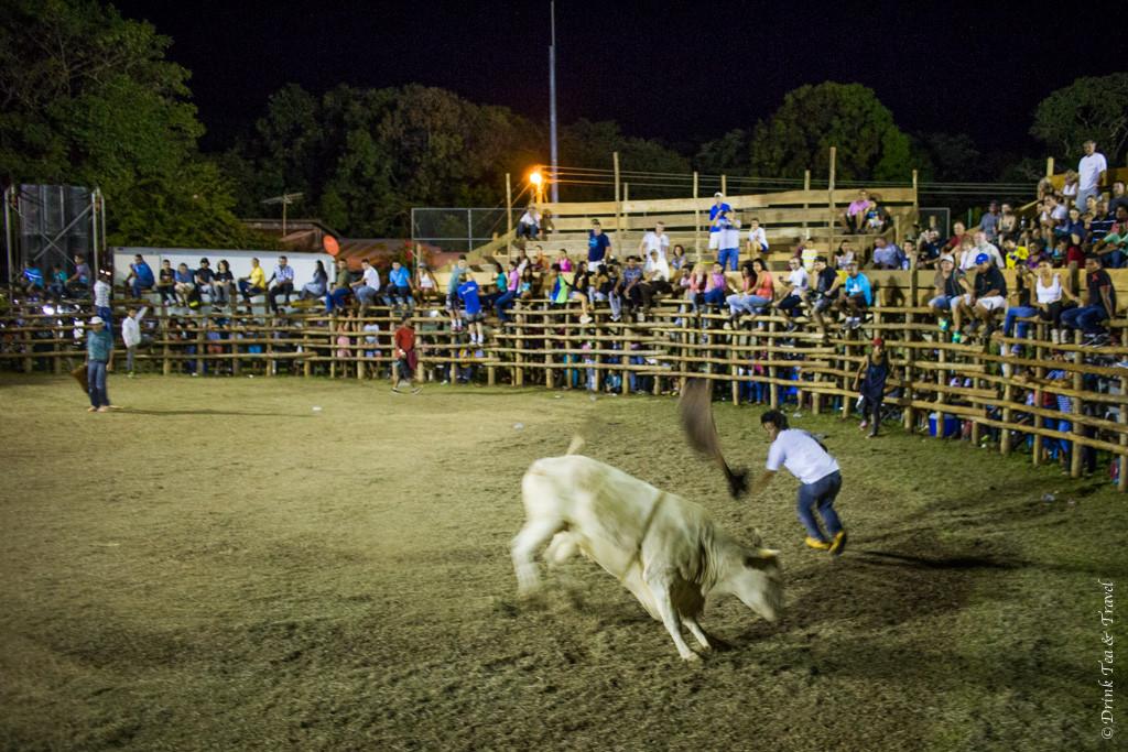 The bull and the matador.