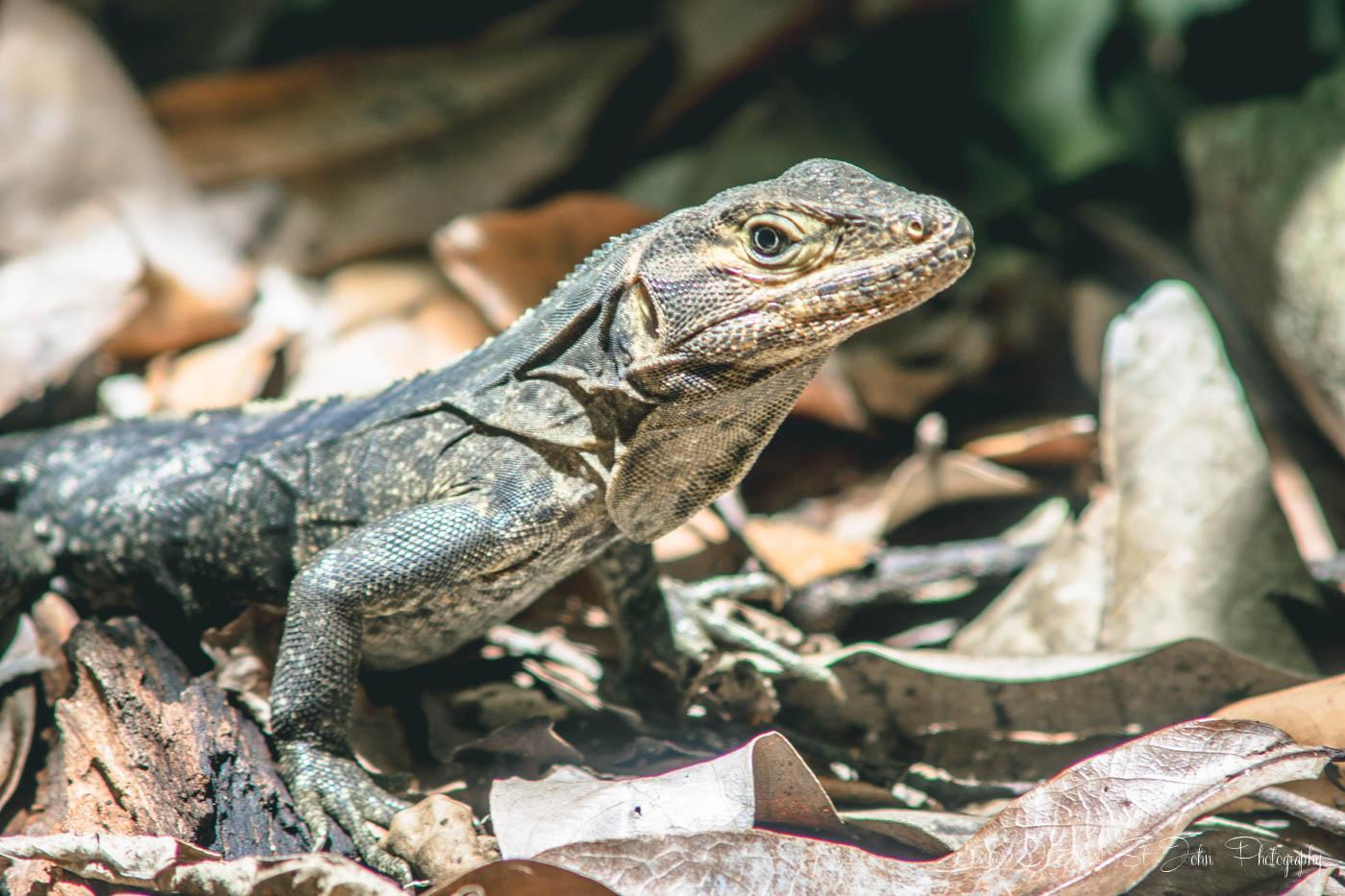 Manuel Antonio National Park:
