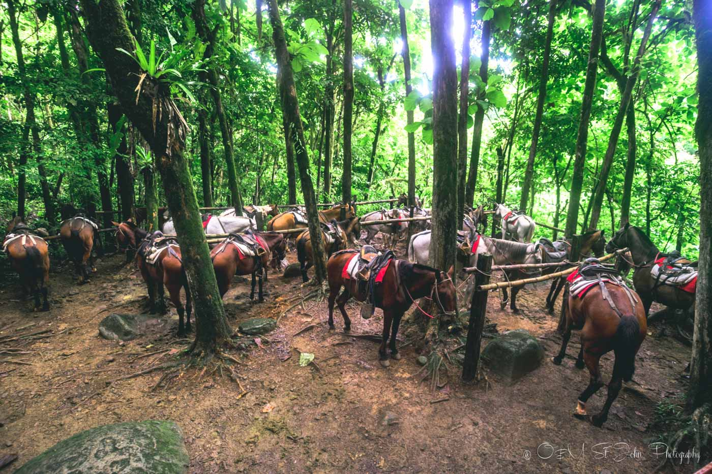 Horseback riding tour at Nauyaca Waterfalls, Costa Rica