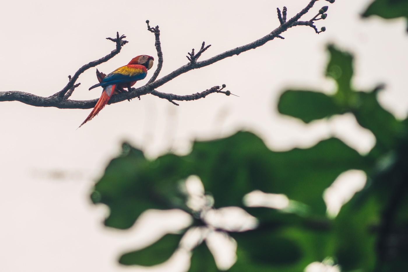 Puerto Jimenez Costa Rica: Visit Corcovado National Park