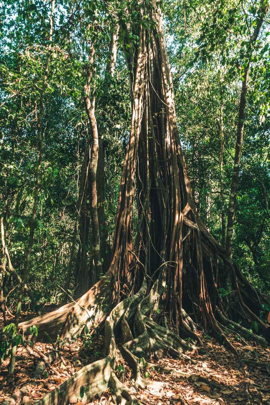 Guide to Volunteering in Costa Rica