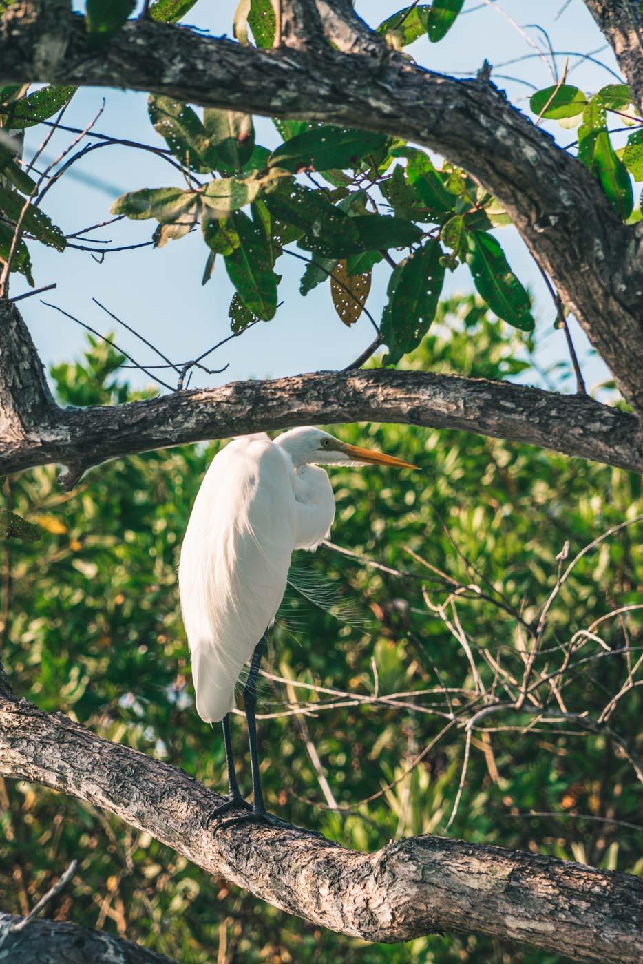 Puerto Jimenez Costa Rica: birdwatching