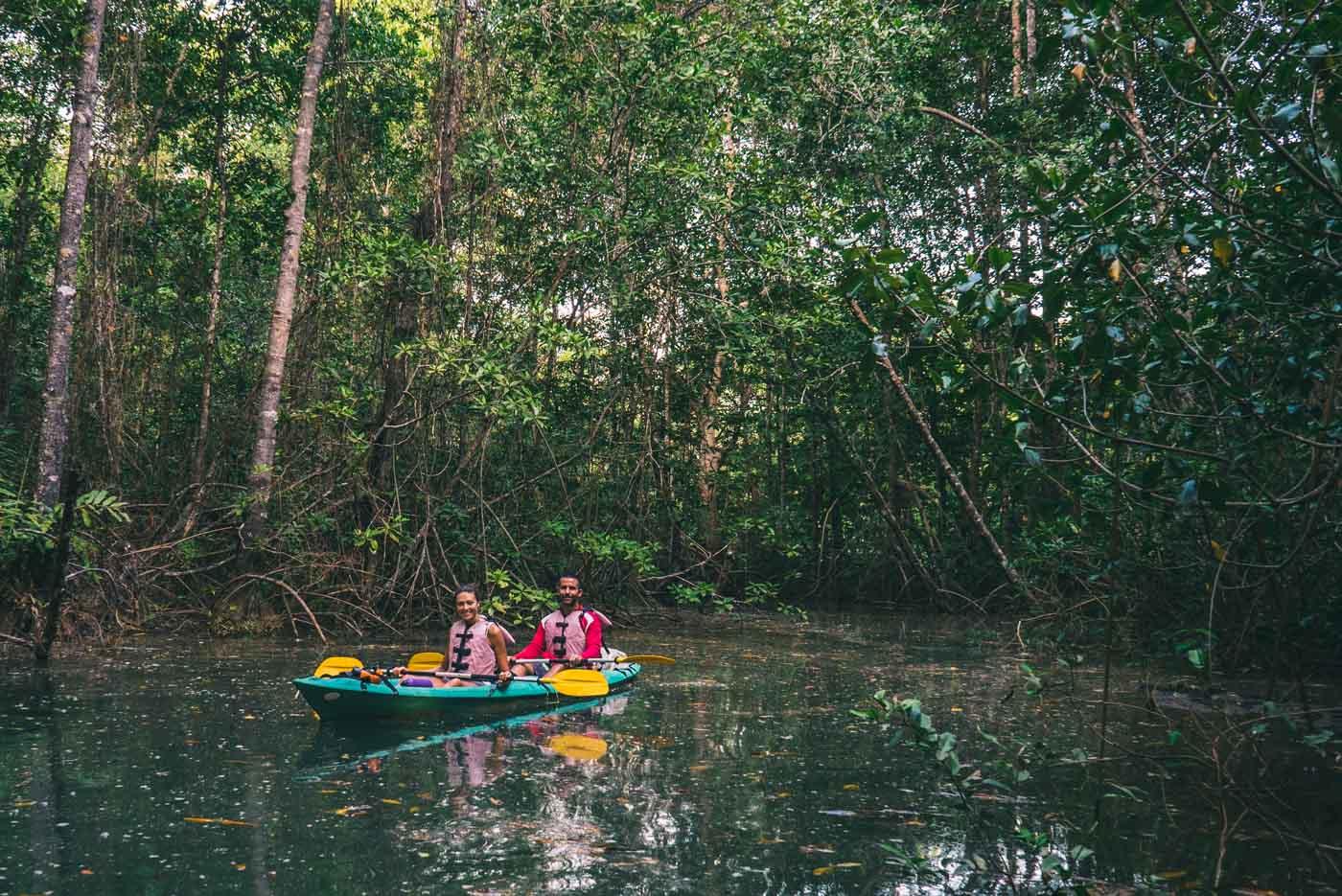 Puerto Jimenez Costa Rica: Kayaking in the mangroves of Osa Peninsula
