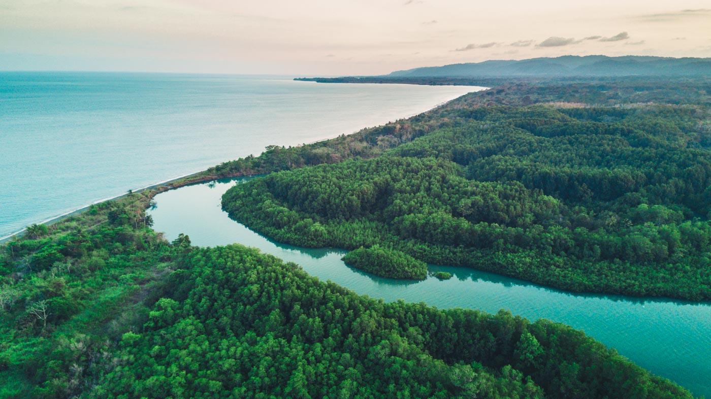 The mangrove swamps of Gulfo Dulce, Osa Peninsula