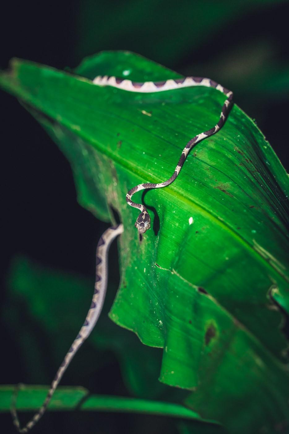 Puerto Jimenez Costa Rica: snakes