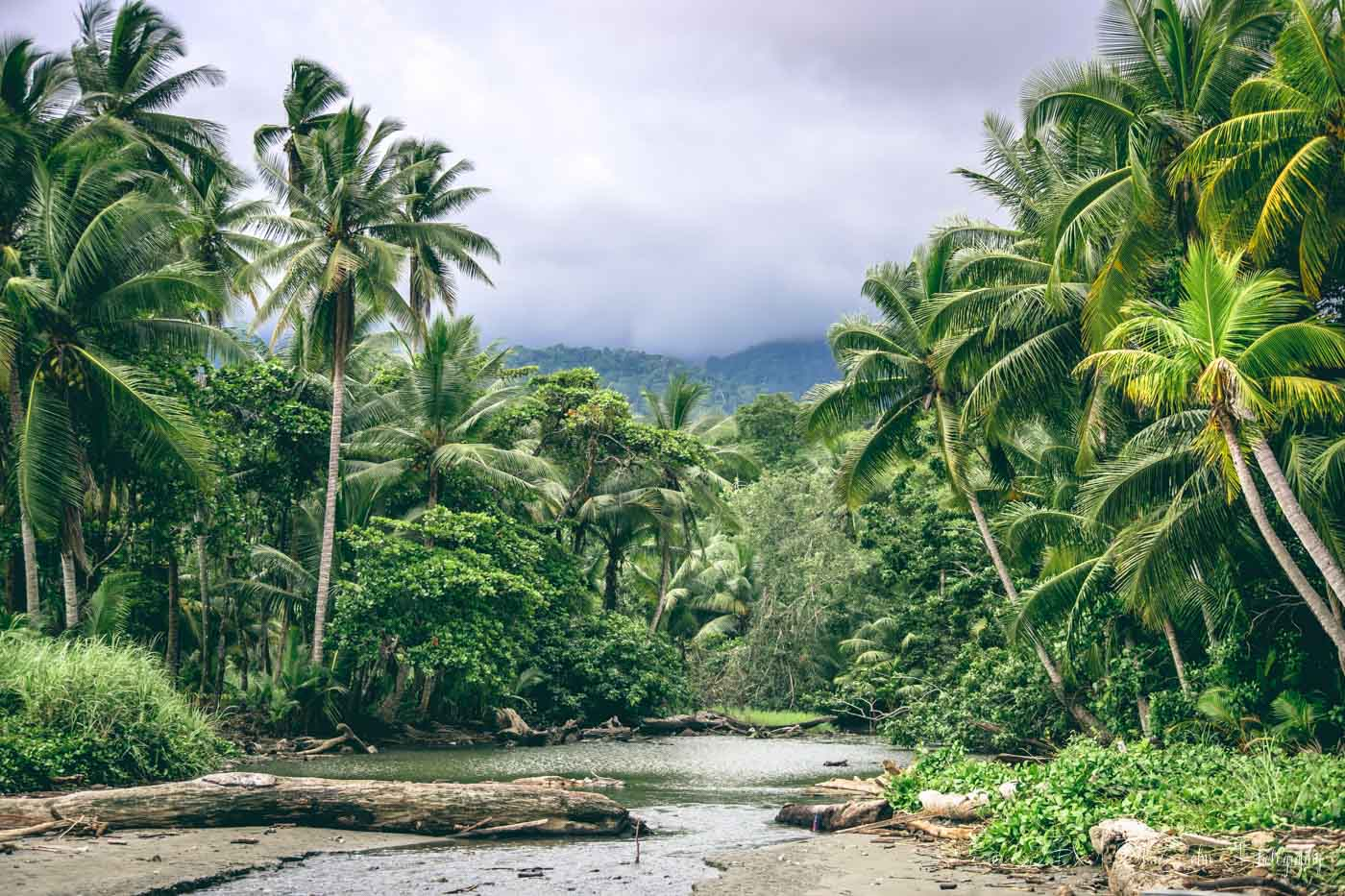 The great jungle of Costa Rica