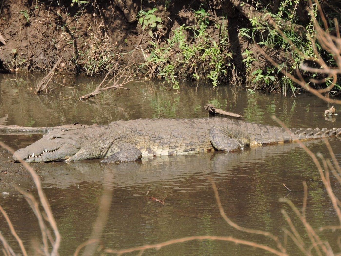 luxury wildlife experiences