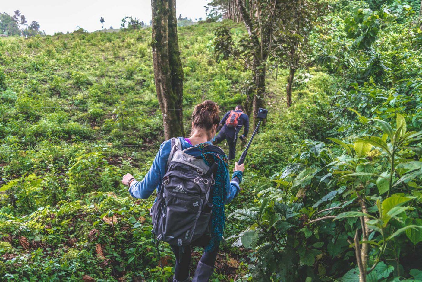 Bwindi National Park mountain trekking