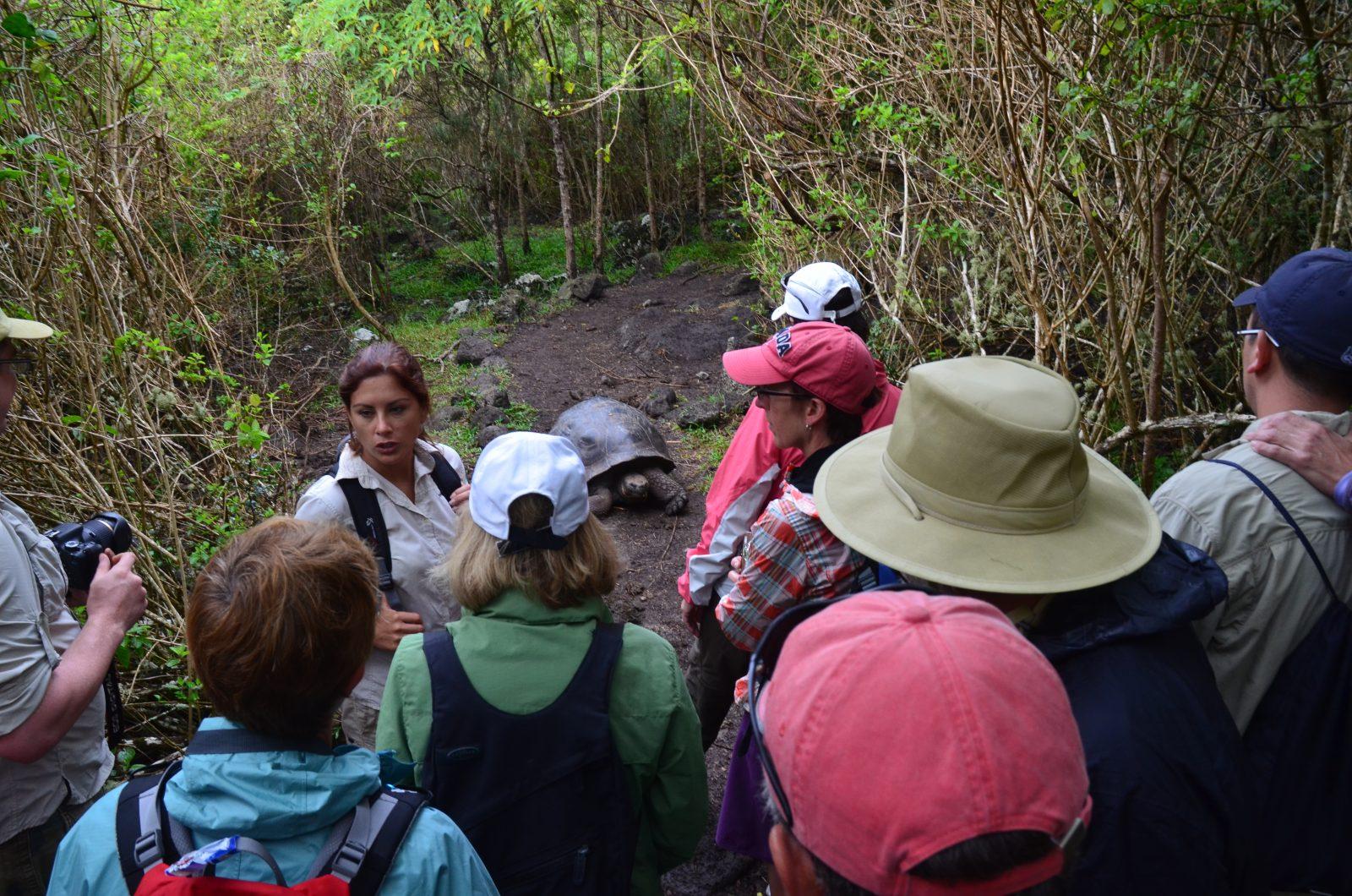 Encounter with a tortoise on Floreana Island. Photo courtesy of Galakiwi