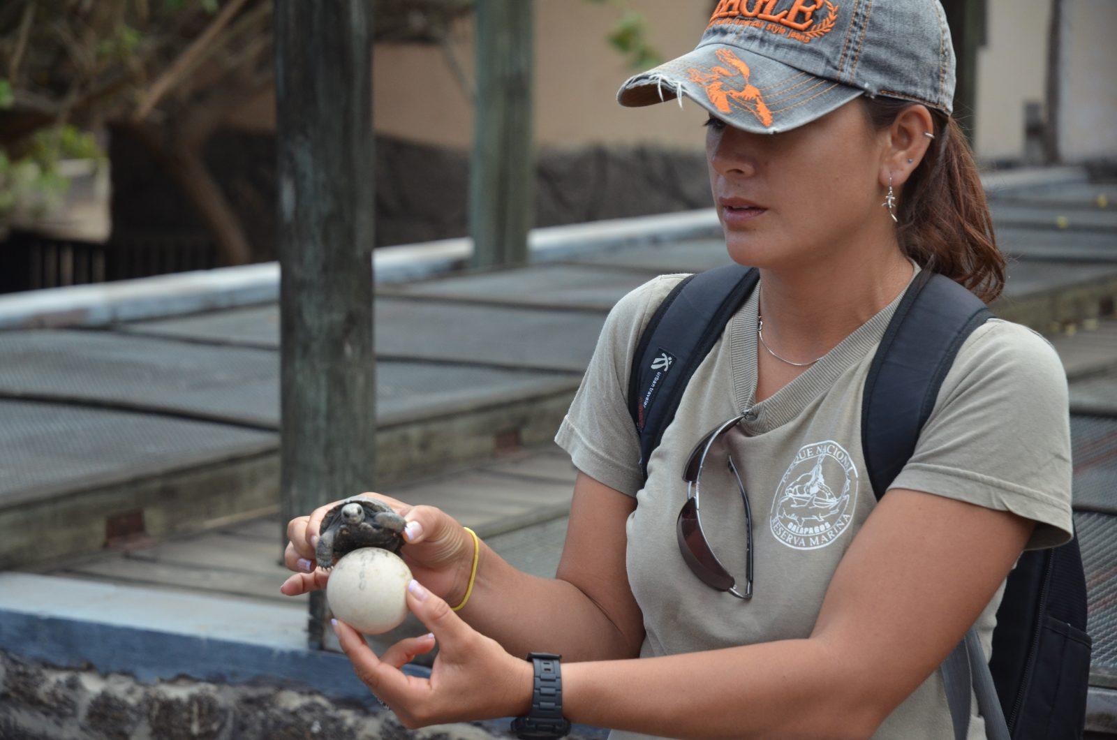 Tortoise Breeding Centre on Isabela Island. Photo courtesy of Galakiwi