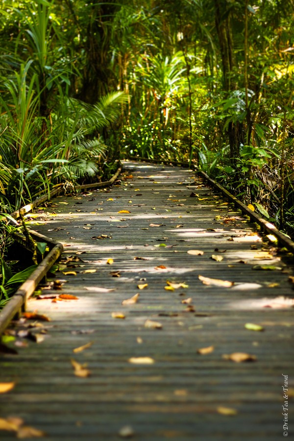 Boardwalk inside the Daintree National Park. It's incredibly well kept, isn't it?
