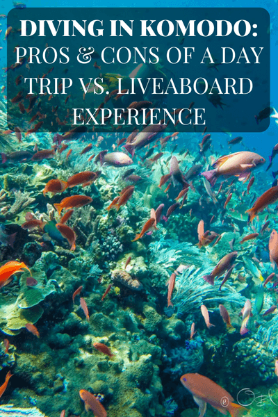 While we really loved our experience diving in Komodo on a day boat and on a liveaboard, we found a few pros and cons for choosing one option over the other