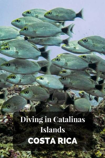 Diving in Catalinas islands Costa Rica