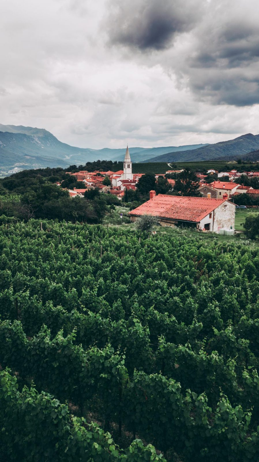 Vipava Valley: Look out onto the Vipava Valley