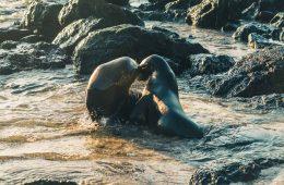 San Cristobal Galapagos the unrated island of Ecuador