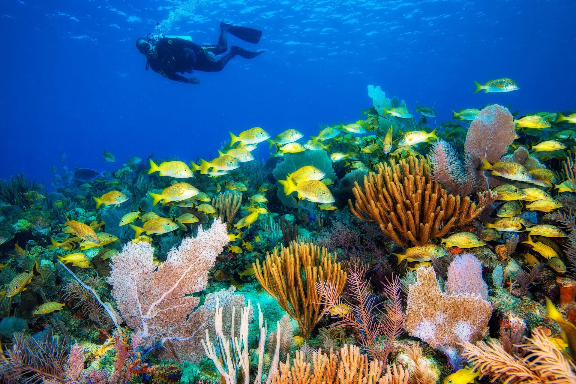 Diving in Jardines de la Reine in Cuba. Photo by Foto Explorer