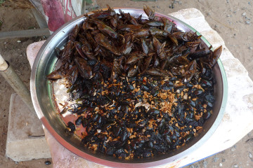 Cultural Close-Ups: Insect Snacks in Cambodia