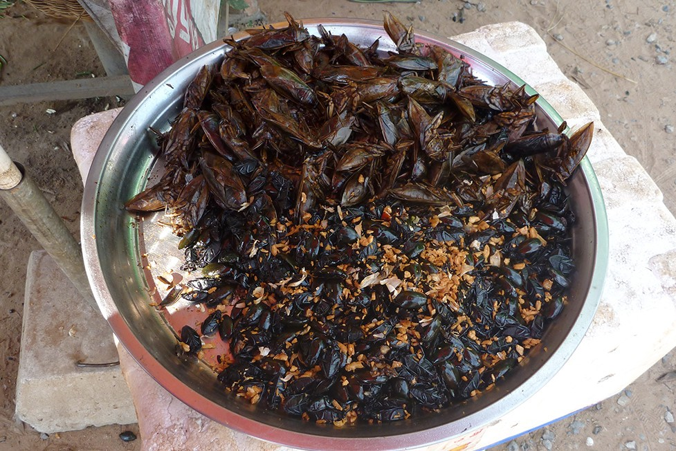 Fried Beetles Moths. Food in Cambodia