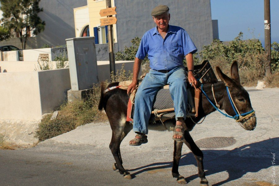 Cultural Close-up: Donkey Ride in Santorini, Greece
