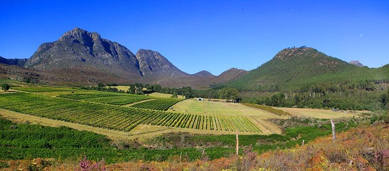 Herold Wines, George, Garden Route